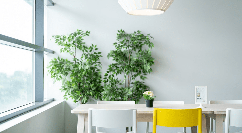 plants in living room with white wall