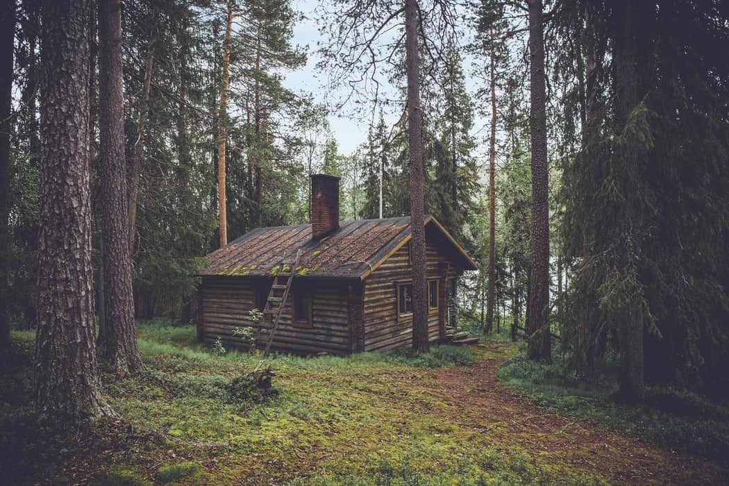 small wooden house in forest